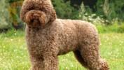 Откраднаха породисти кучета за 20 хиляди лева от къща в Разград