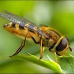 Bee_wallpapers_2